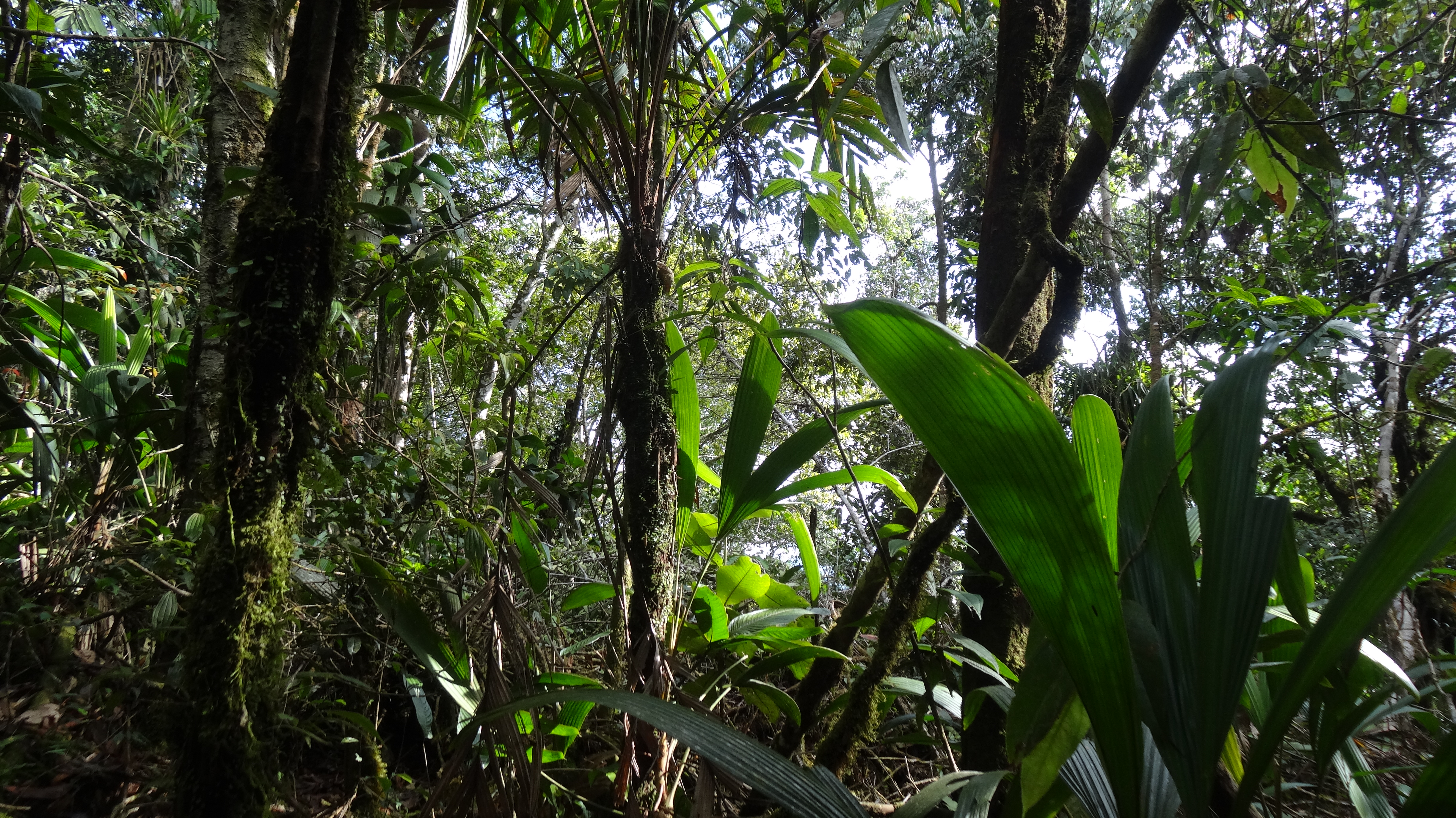 Thick jungle, at the top of the mountain