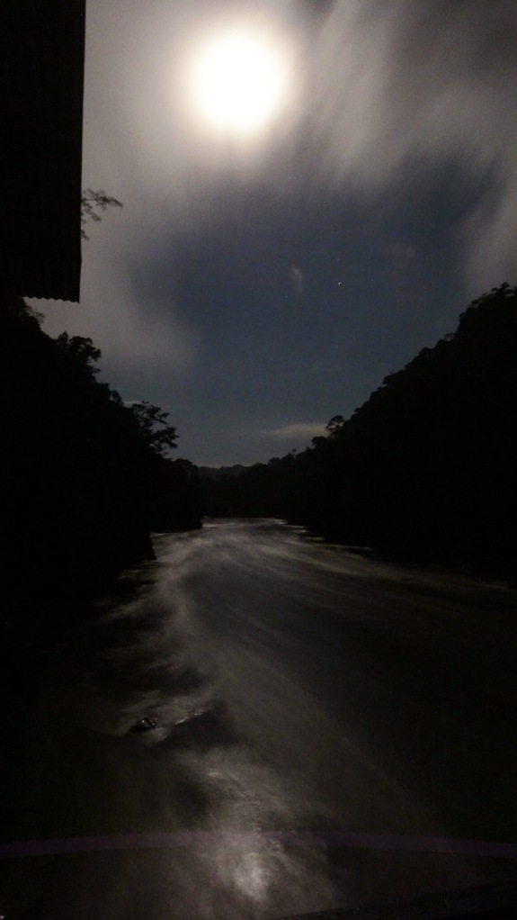 Just your average night landscape in the jungle!